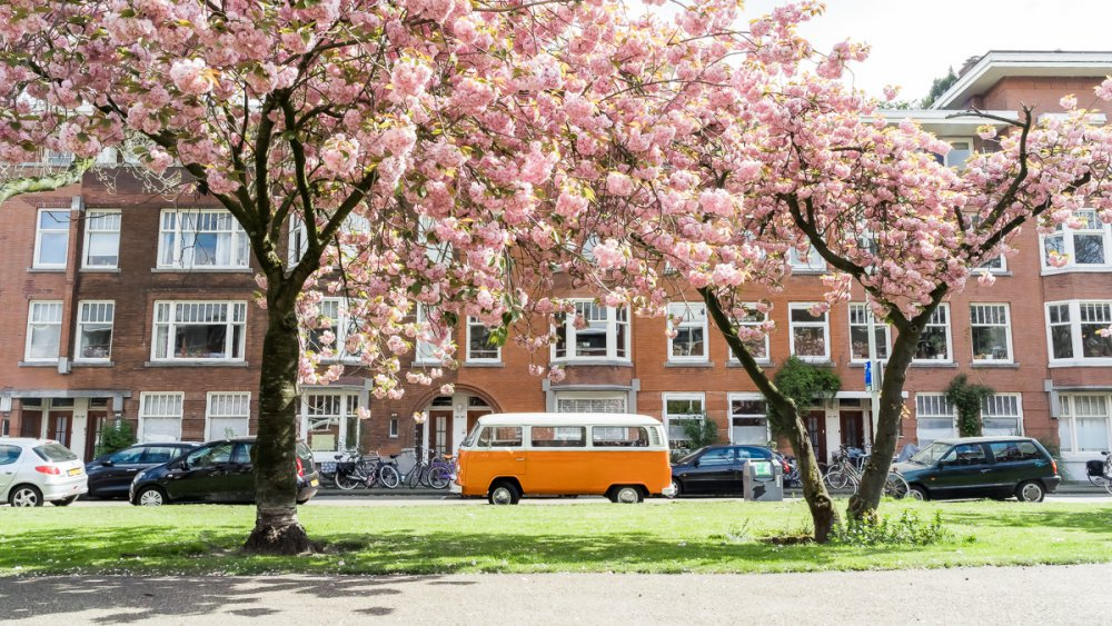 wendy-van-aal-rotterdam-00978